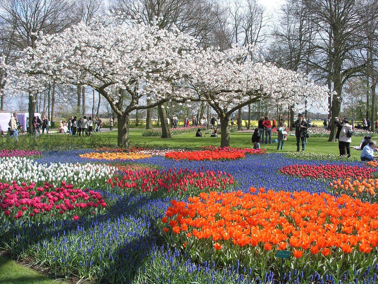 Jardín Keukenhof En Holanda Uno De Los Jardines Más Hermosos ... pour Jardin De Keukenhof