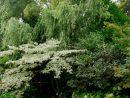 Jardin. Le Jardin Des Sables, Dans La Drôme dedans Arbre Pour Petit Jardin