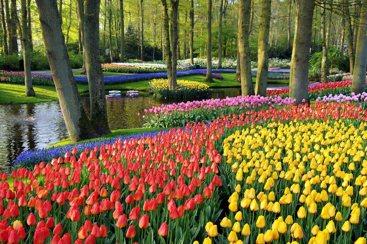 "Jardins De Babylone On Twitter: ""the Most #beautiful Spring ... à Jardin De Keukenhof"
