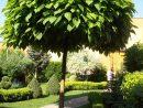 Katalpa | Arbres Pour Petit Jardin, Idées Jardin Et ... destiné Arbre Pour Petit Jardin