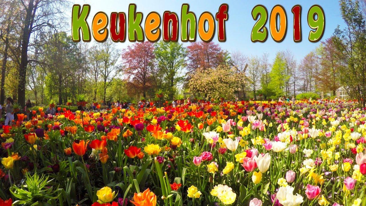 Keukenhof 2019. Full Hd. Keukenhof Is The Garden Of Europe. serapportantà Jardin De Keukenhof