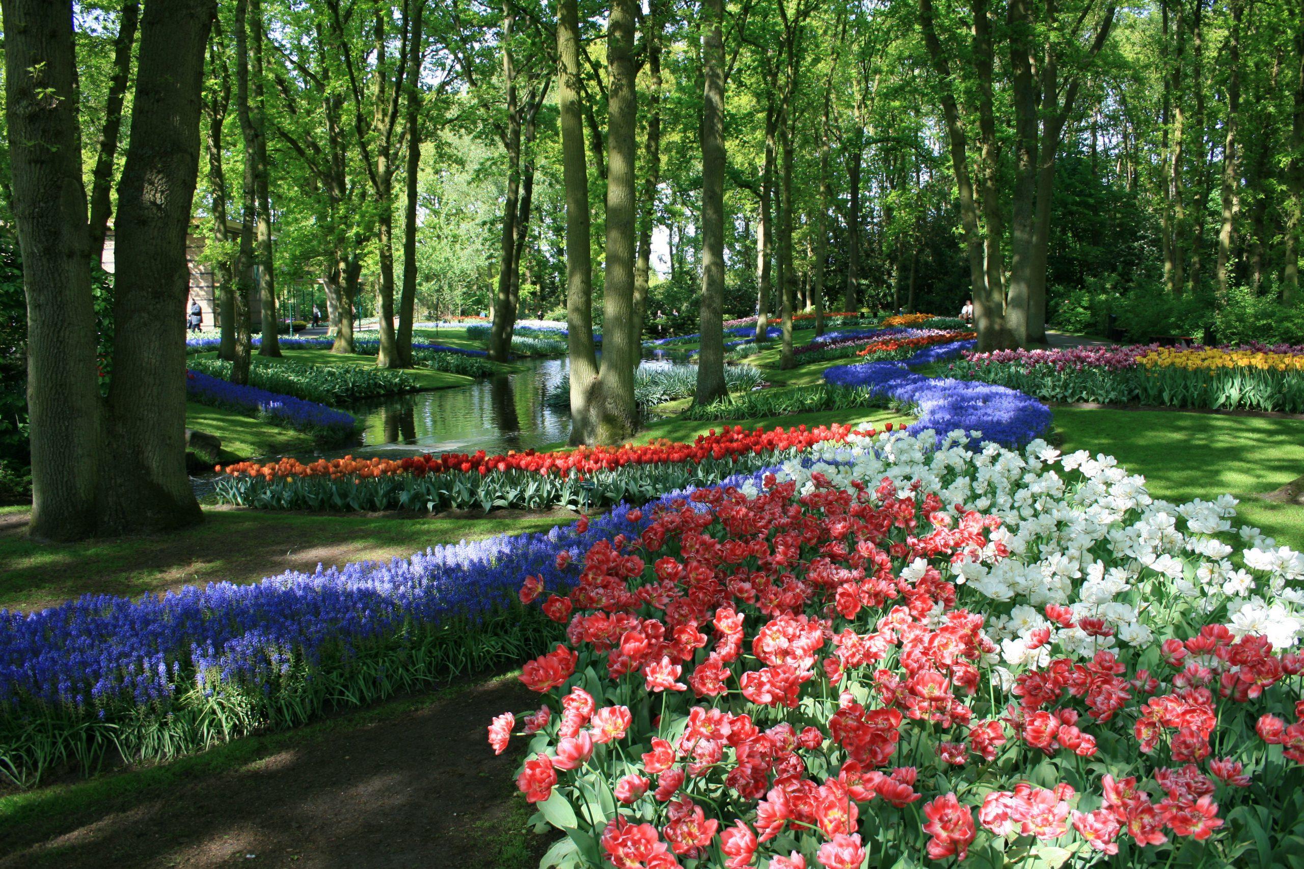 Keukenhof - Wikipedia avec Jardin De Keukenhof