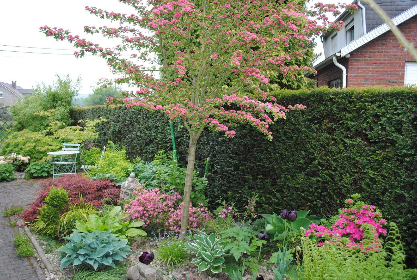 La Passion D'anne-Marie: Mes Arbres Pour Mon Petit Jardin ... avec Arbre Pour Petit Jardin