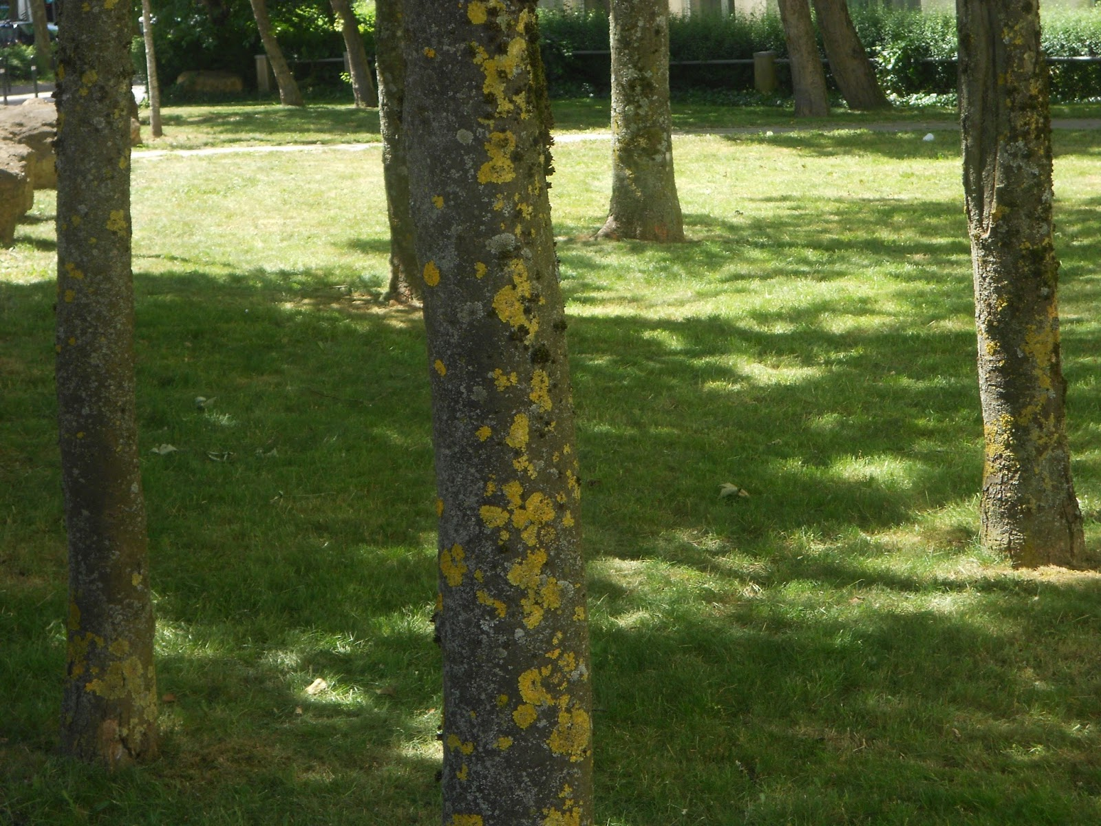 Le Jardin Sauvage Ana Nb: Le Silence De L' Écorce dedans Ecorces Jardin