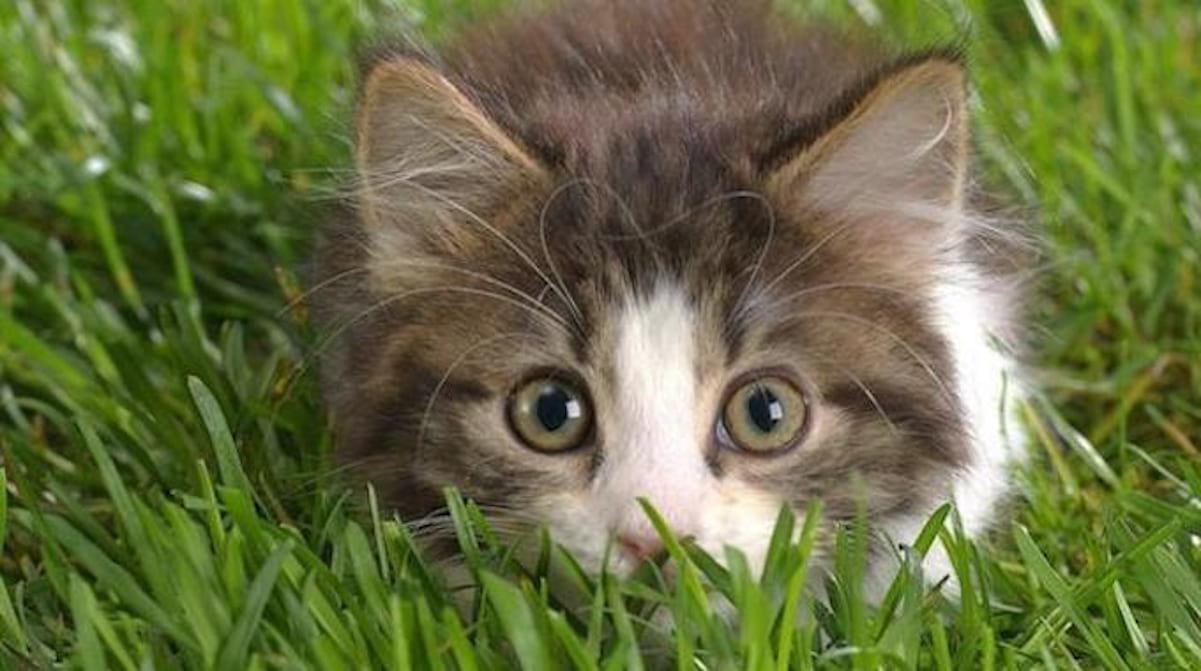 Le Répulsif Naturel Qui Marche Pour Faire Fuir Les Chats Du ... concernant Repousse Chat Jardin