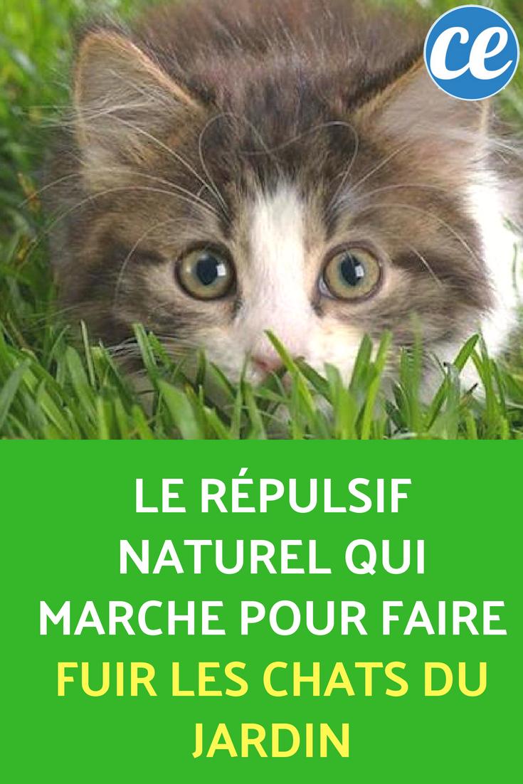 Le Répulsif Naturel Qui Marche Pour Faire Fuir Les Chats Du ... serapportantà Repousse Chat Jardin