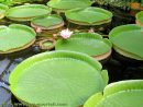 Les Plantes Aquatiques Pour Bassins De Jardin à Plante Bassin De Jardin