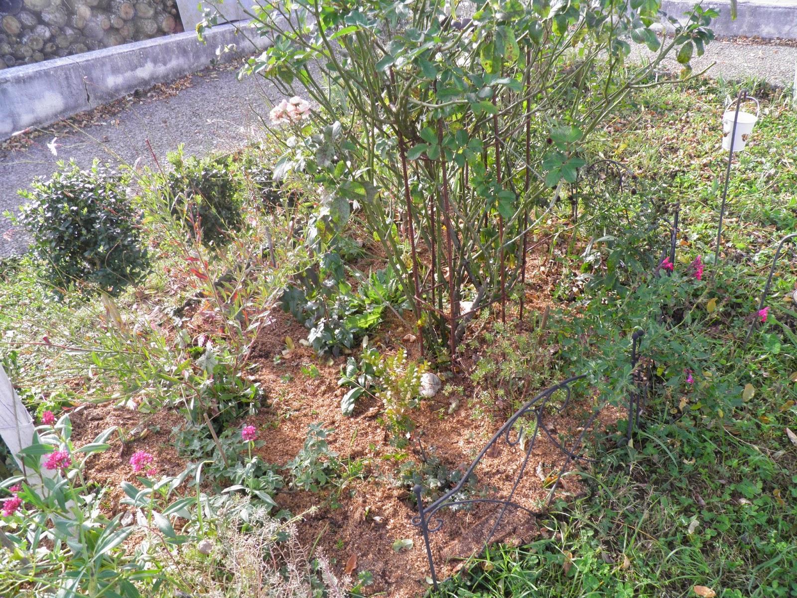 Mon Jardin Quercynois: Novembre 2014 à Copeaux De Bois Jardin