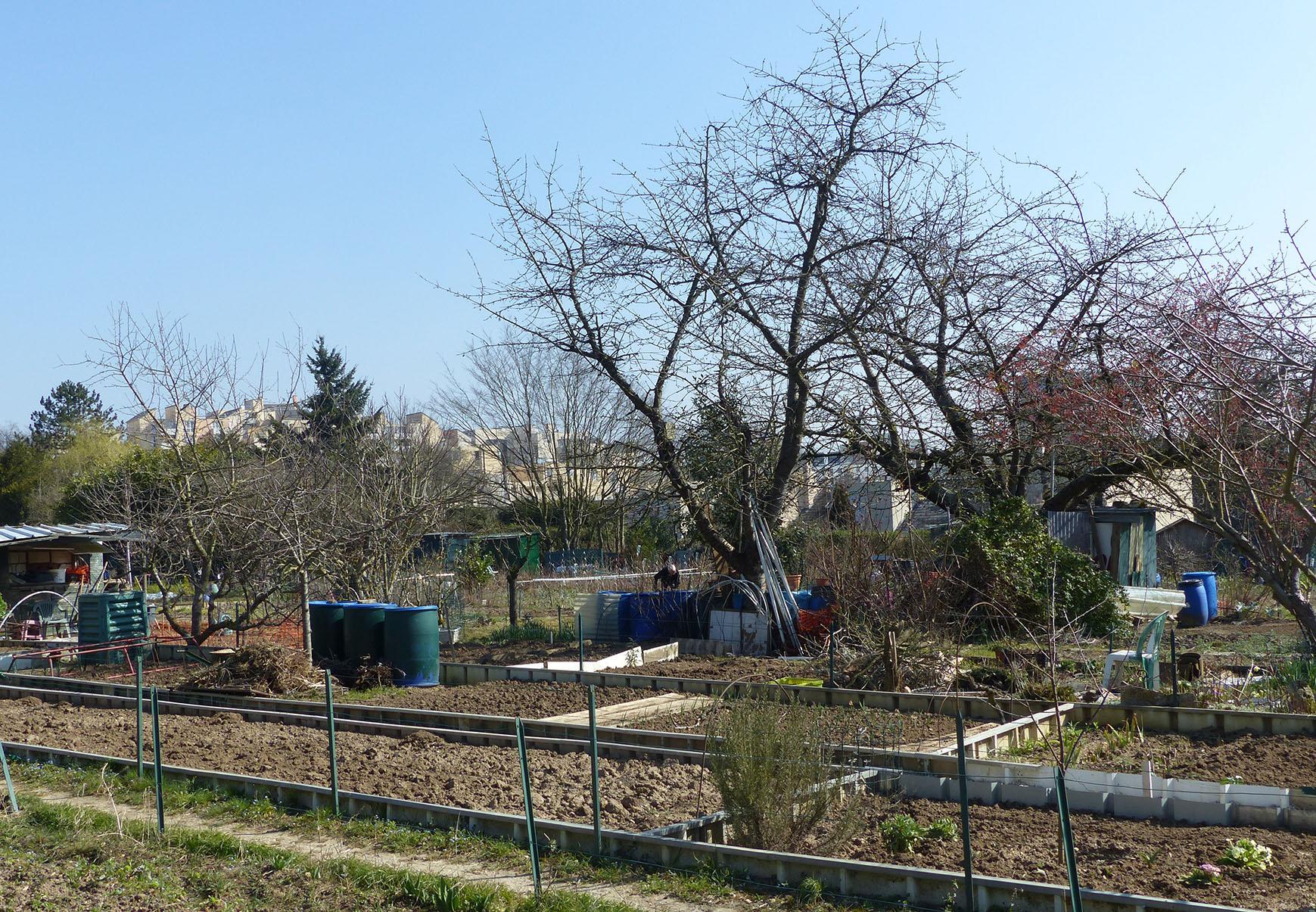 Nature En Ville À Cergy-Pontoise | De La Sciure Pour Le Jardin encequiconcerne Copeaux De Bois Jardin