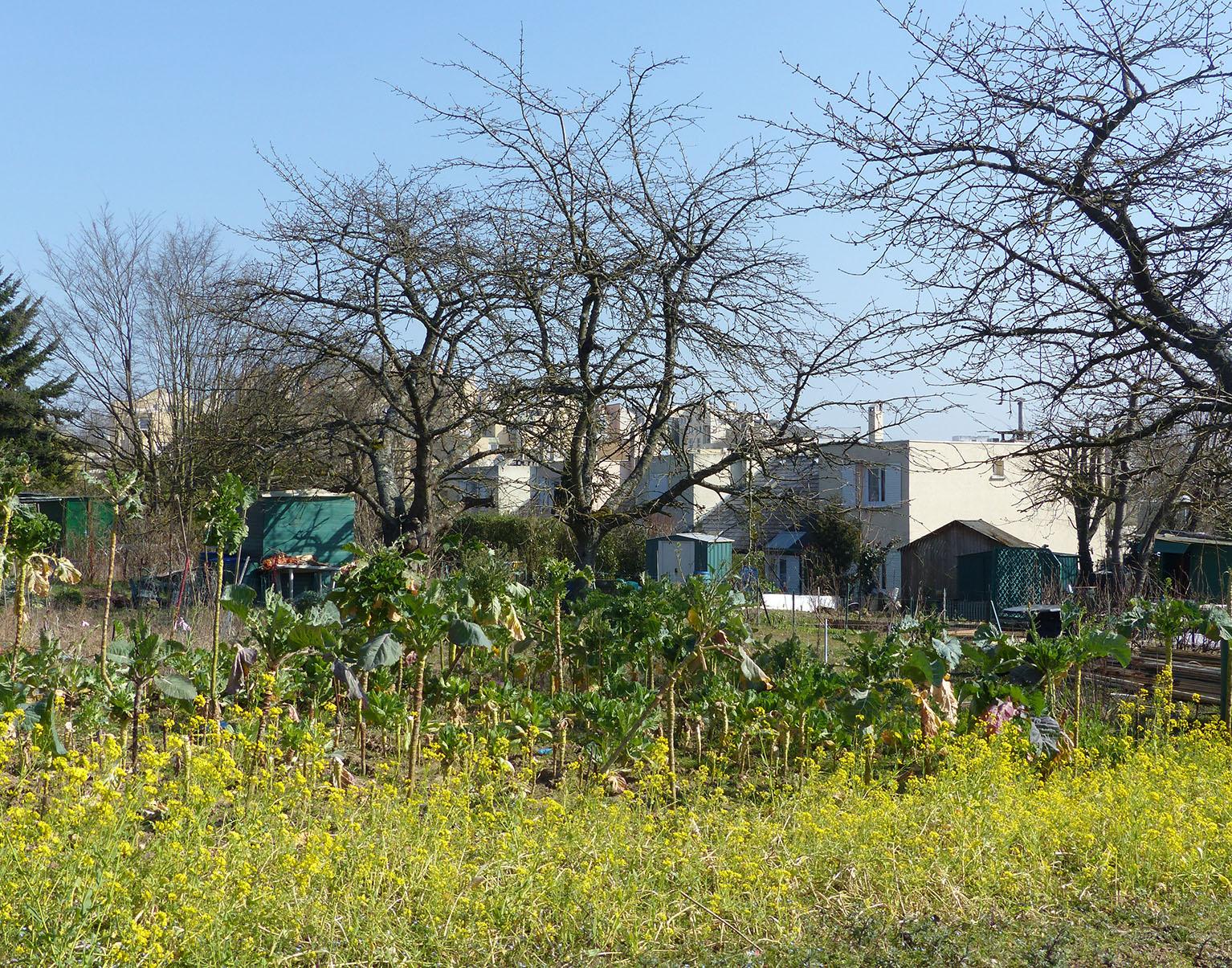 Nature En Ville À Cergy-Pontoise | De La Sciure Pour Le Jardin tout Copeaux De Bois Jardin