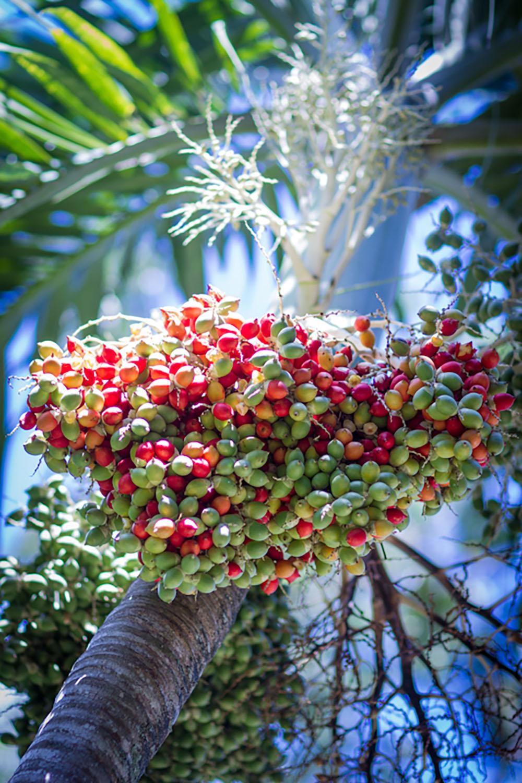 Photos De Guadeloupe - Au Jardin Des Colibris à Au Jardin Des Colibris