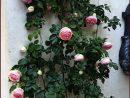 Pierre De Ronsard En Fleur... | Garden Design, Cool Plants ... intérieur Salon De Jardin En Pierre