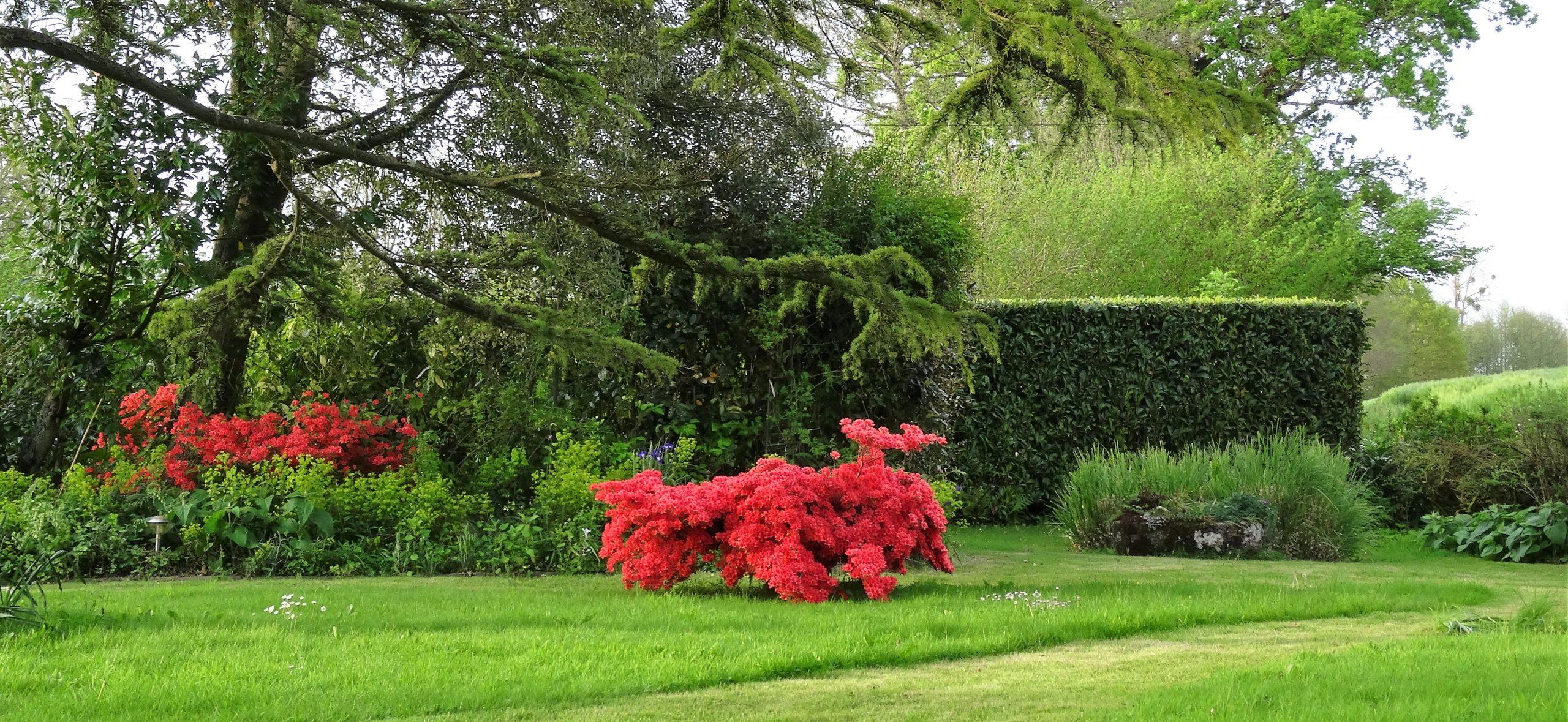 Plantes De Terre De Bruyère : Conseils Pour Bien Réussir Ses ... tout Exemple D Aménagement De Jardin