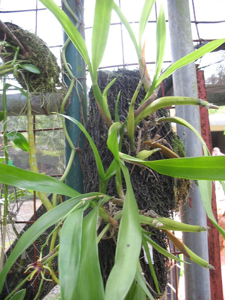 Plantes Sur Écorces Suspendues | [Jardin Botanico, Santo Dom ... pour Ecorces Jardin