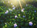 Que Planter Dans Son Bassin De Jardin ? avec Plante Bassin De Jardin