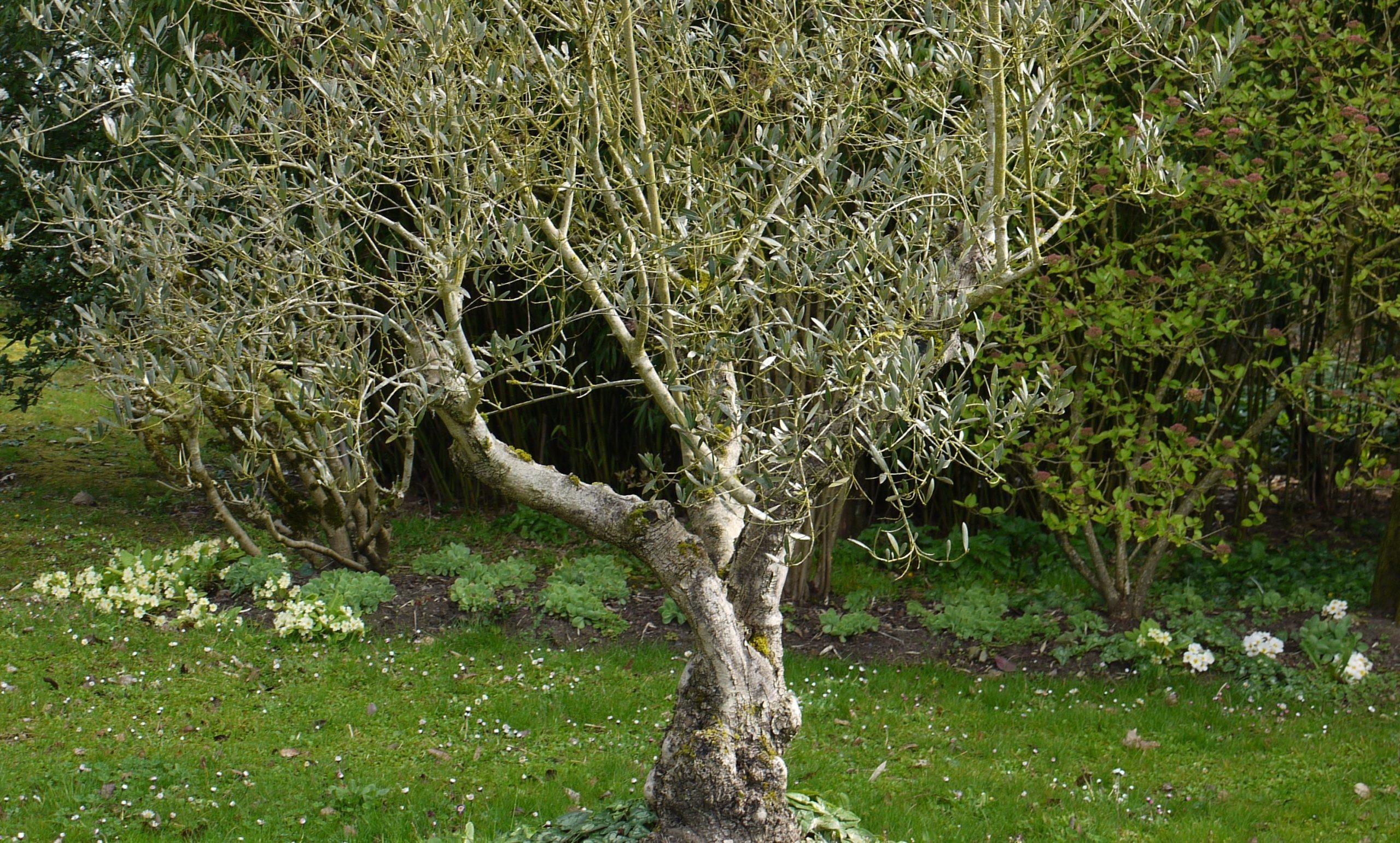 Quel Arbre Pour Mon Jardin ? - M6 Deco.fr dedans Arbre Pour Petit Jardin