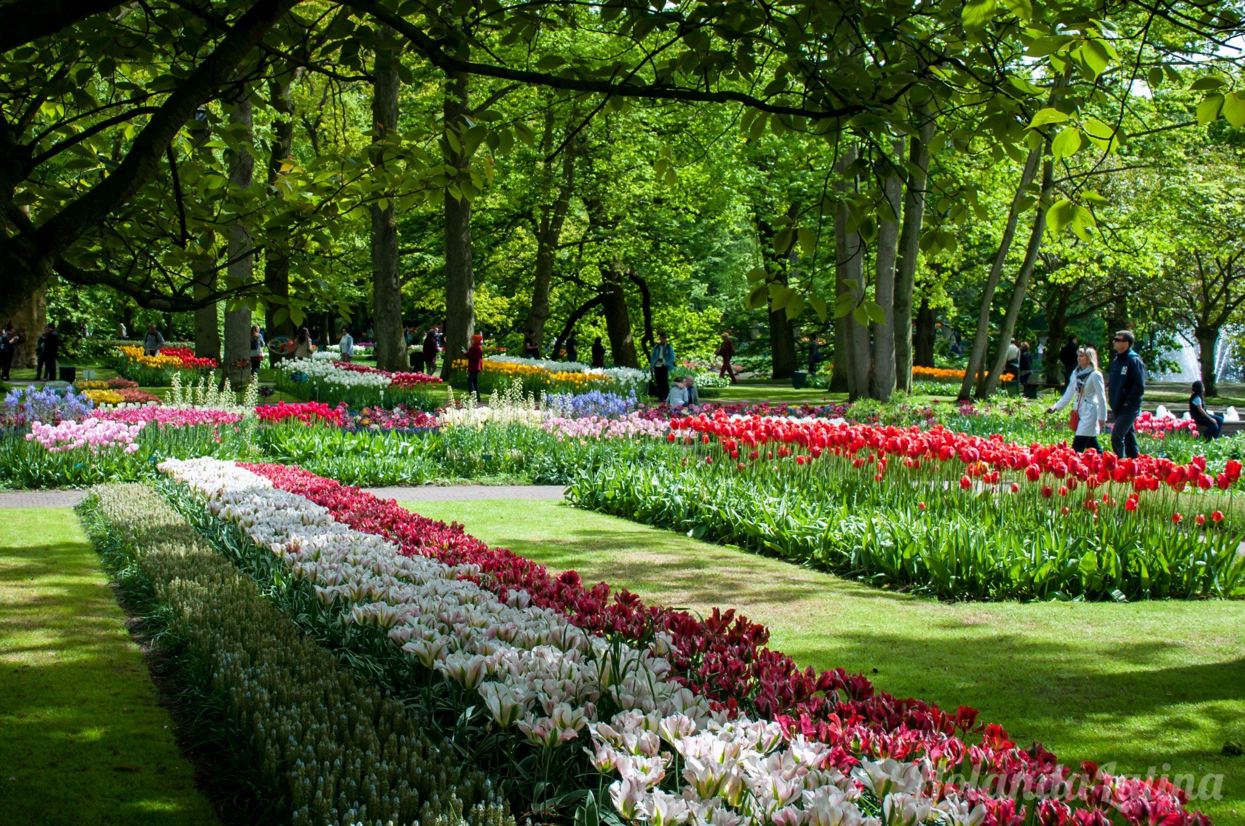 Rare Jardines De Keukenhof Amsterdam tout Jardin De Keukenhof