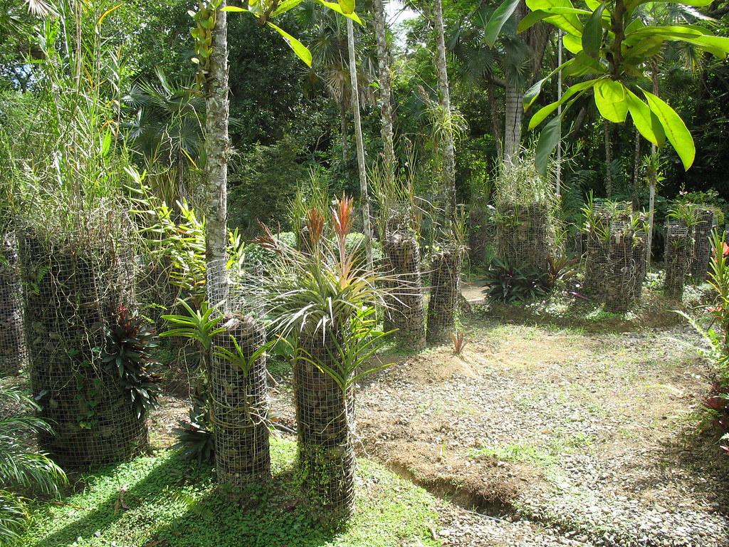 Substrat D'écorces De Coco Grossier | [Jardin Botanico, Sant ... encequiconcerne Ecorces Jardin