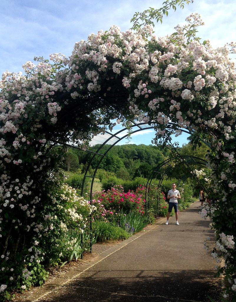 Un Arceau De Roses Blanches Au Jardin Botanique De Villers ... intérieur Arceau Jardin