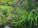 Un Jardin Boudoir En Ville | Jardins, Joli Jardin Et Beaux ... à Plante Bassin De Jardin