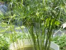 Un Point D'eau Apporte Fraîcheur Et Biodiversité À Votre ... tout Plante Bassin De Jardin