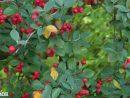 Une Haie D'arbustes À Petits Fruits Déco Et Utiles Pour Les Oiseaux destiné Arbre Pour Petit Jardin