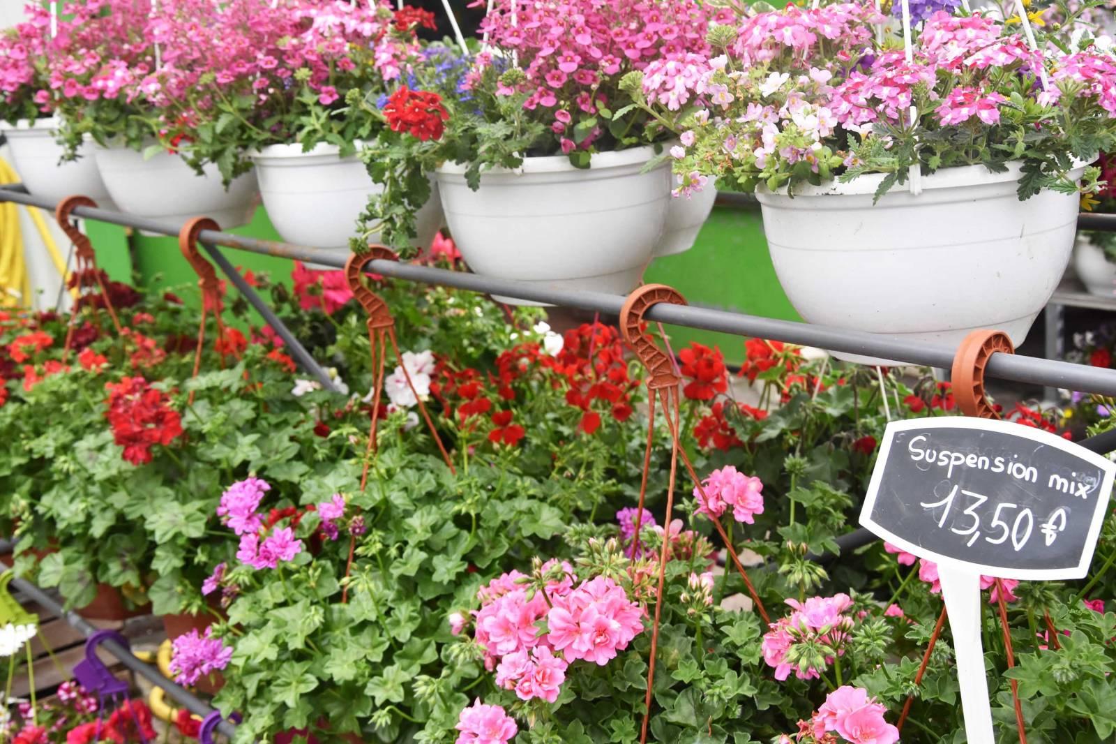 Vente Fleurs Et Plantes À Villefranche-Sur-Saône - Les ... dedans Serre De Jardin D Occasion