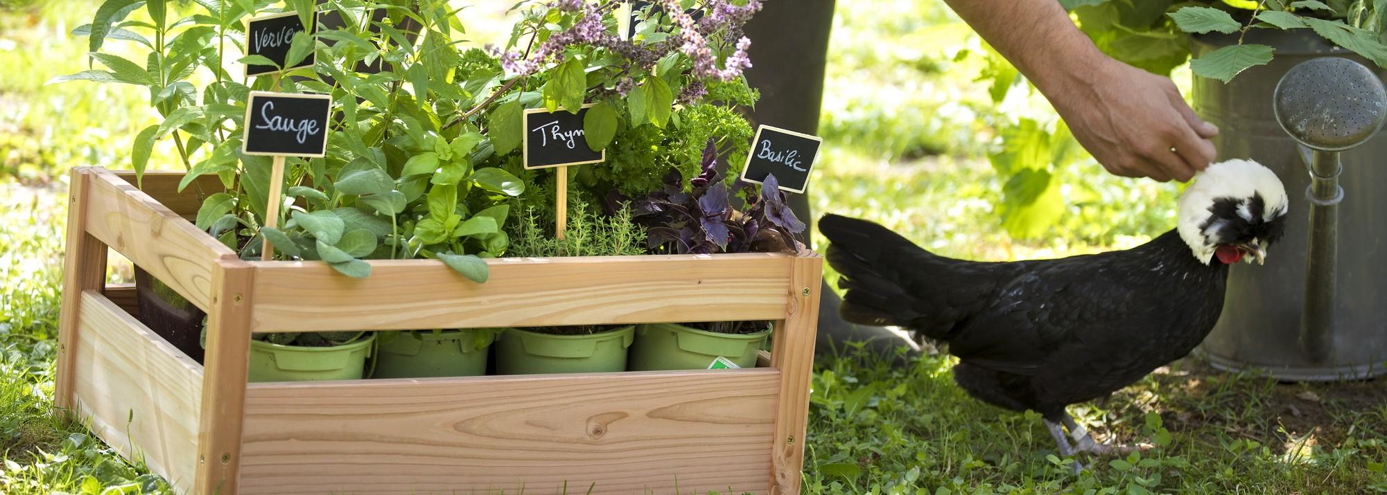 Ventes Privées Botanic® : Une Sélection De Produits Pour Le ... dedans Vente Privée Jardin