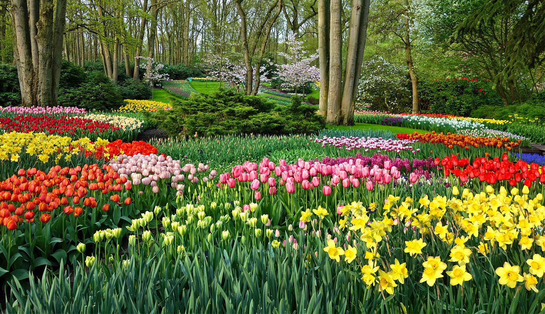 Visit The Keukenhof, The Largest Flower Garden In The World ... pour Jardin De Keukenhof