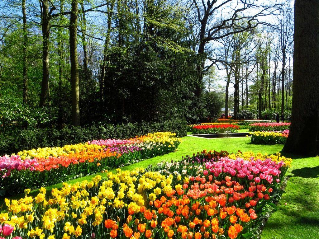 Visiter Le Jardin De Keukenhof Depuis Amsterdam Ce Printemps ... à Jardin De Keukenhof