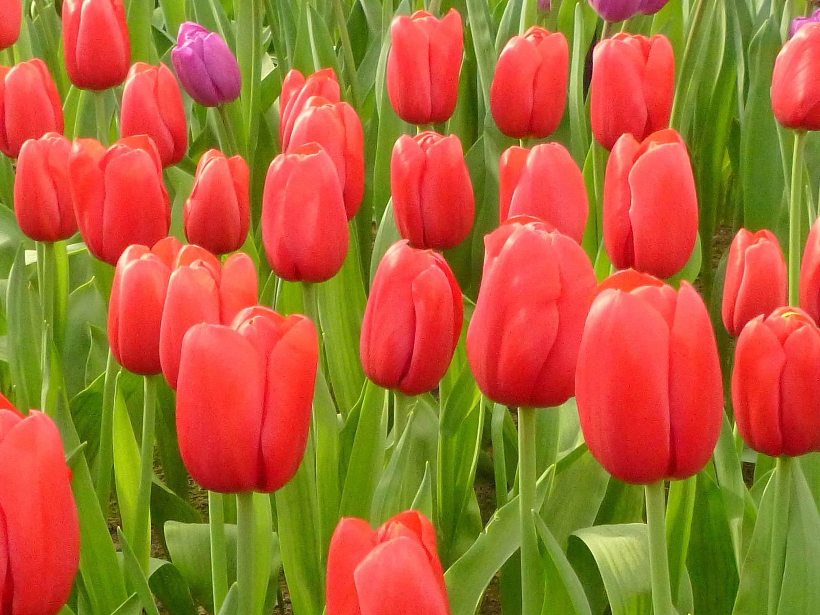 Wikiloc | Picture Of Jardins De Keukenhof (Lisse, Holanda) (3/6) à Jardin De Keukenhof