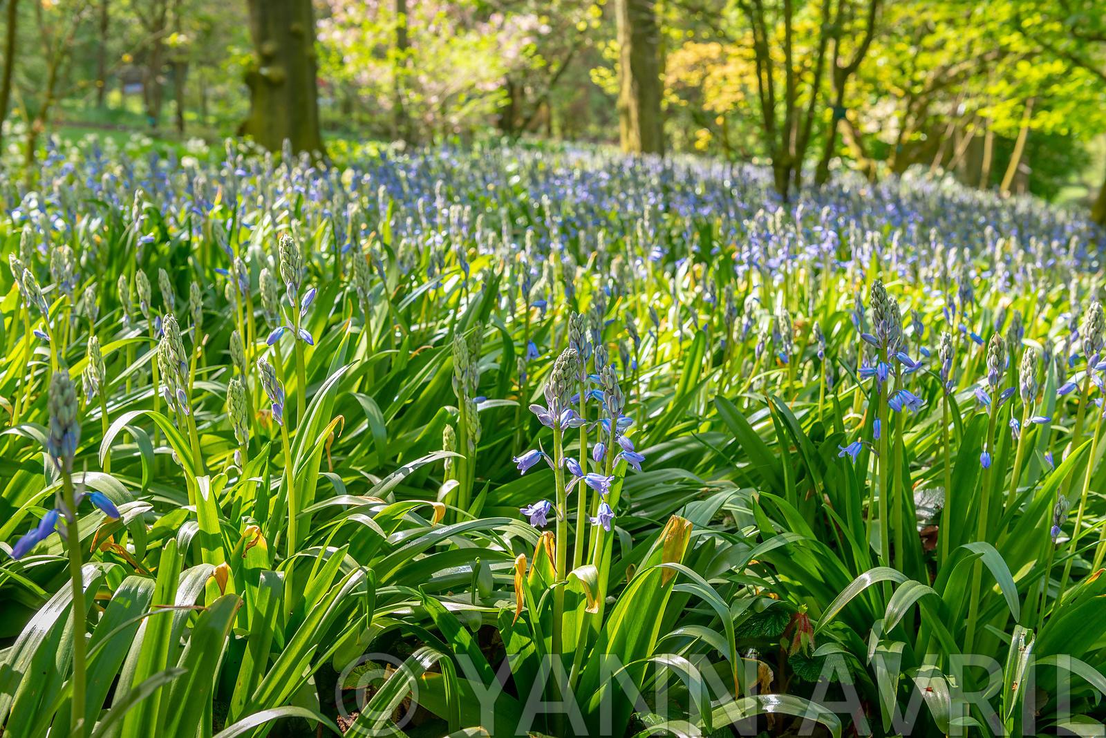 Yann Avril Photography | Garden And Nature Ecorce De Bouleau ... avec Ecorces Jardin