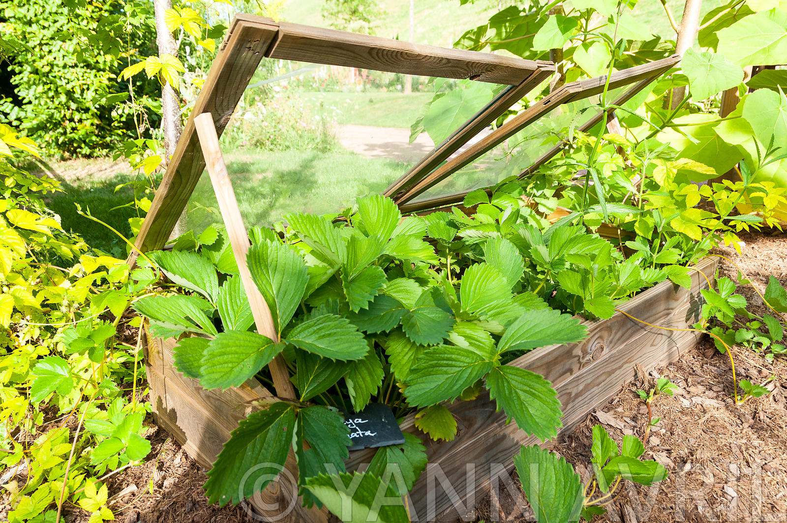 Yann Avril Photography | Garden And Nature Fraisiers Sous ... pour Chassis Jardin