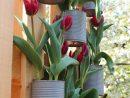 Aménagement Extérieur Et Décoration De Jardin Pas Chers destiné Idée Déco Jardin Extérieur Pas Cher
