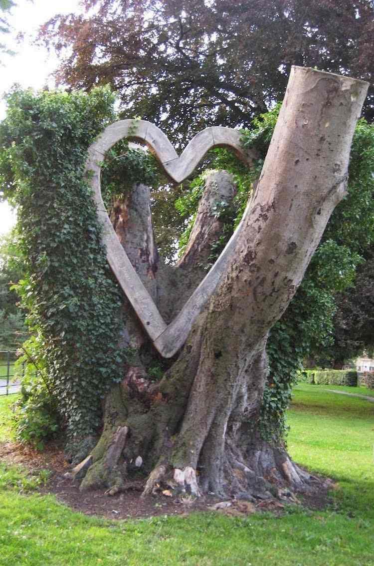 Arbre Mort, Bois Flotté Et Souche D'arbre Pour Décorer Le ... concernant Décorer Un Arbre Mort