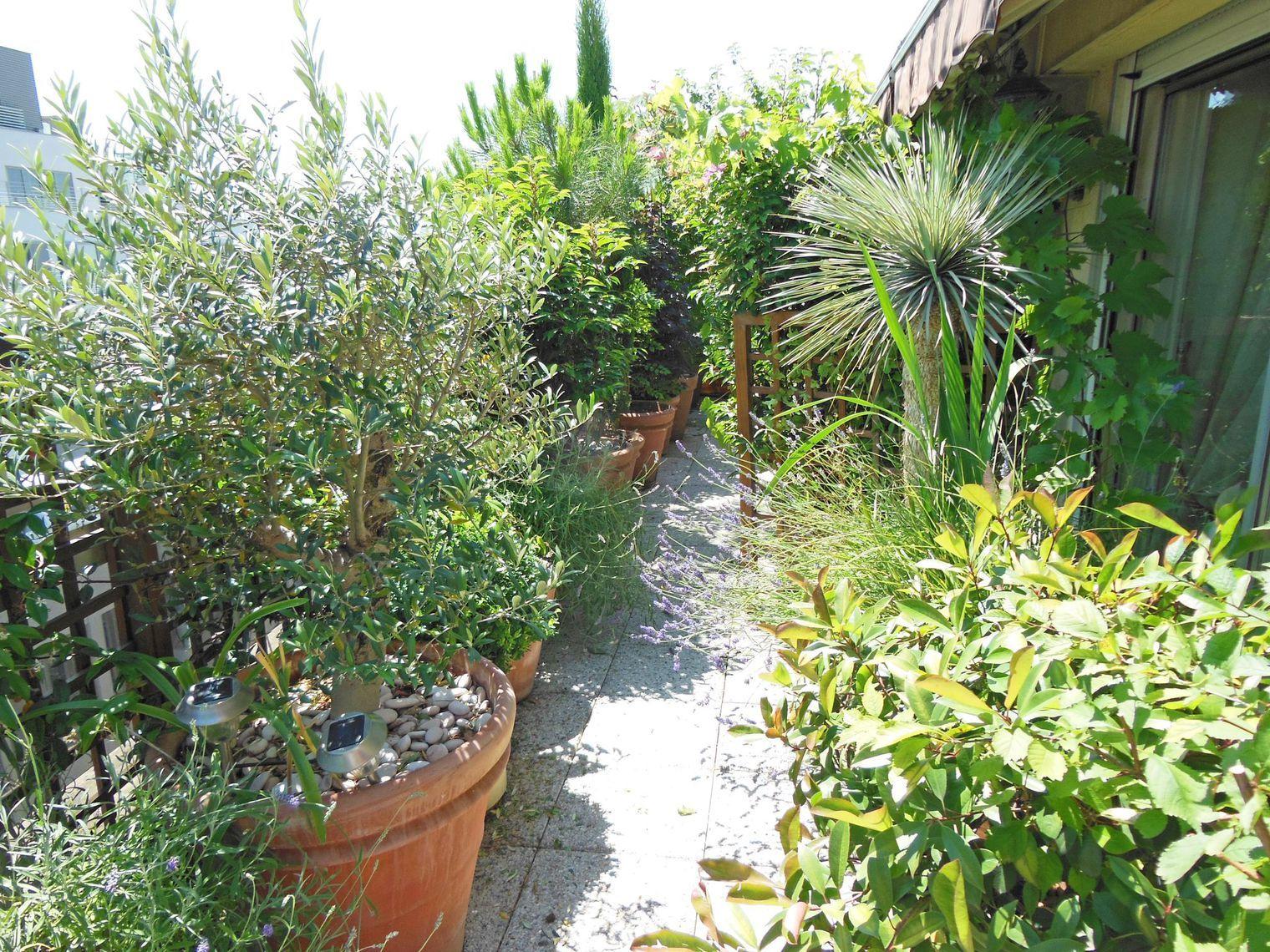 Balcon Plein Sud : Plantes Et Aménagement   Aménagement ... dedans Lame Parfumee Des Jardins