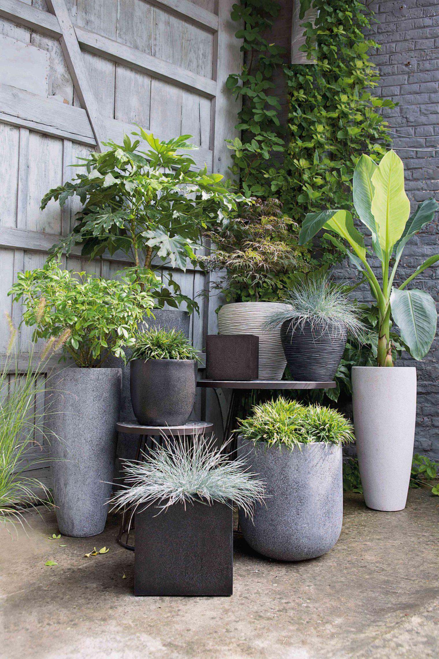 Pot Exterieur Pas Cher | Jardins, Déco Jardin, Fleurs Terrasse à Idée Déco Jardin Extérieur Pas Cher