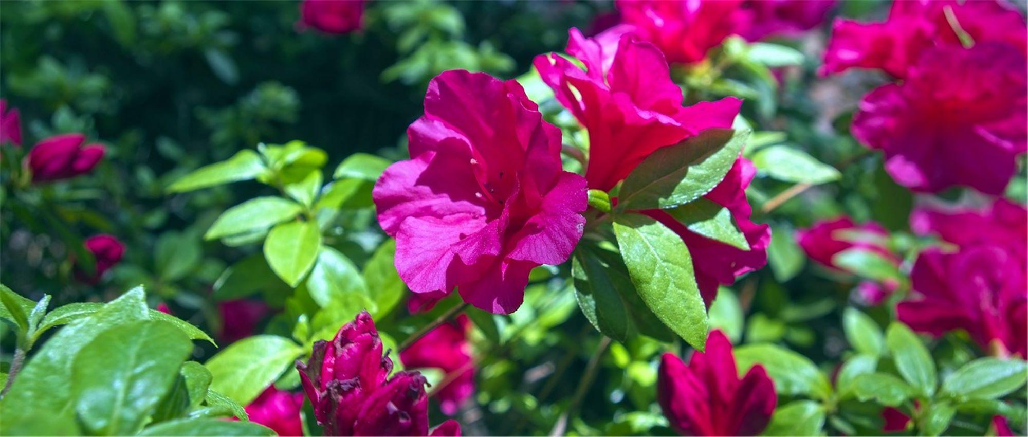 Quelles Fleurs Parfumées Pour Le Jardin ? - Gardena dedans Lame Parfumee Des Jardins