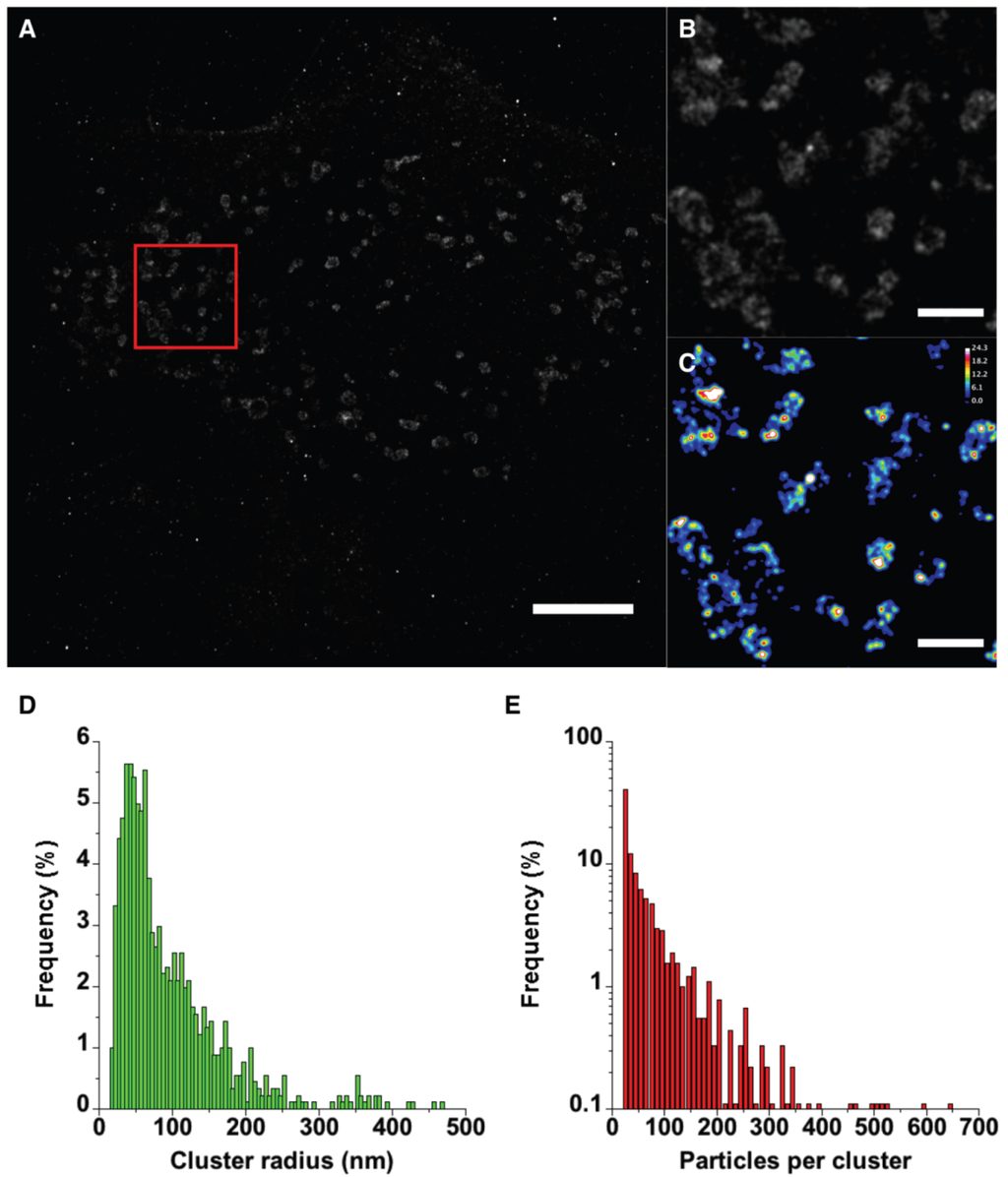 Viruses | Free Full-Text | Superresolution Imaging Of Human ... tout Dalle Bip Airial Gris