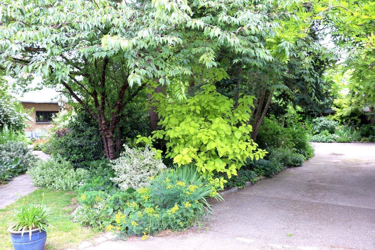 Visite Du Jardin De Danielle Et Paul - Le Blog De Pjh intérieur Lame Parfumee Des Jardins