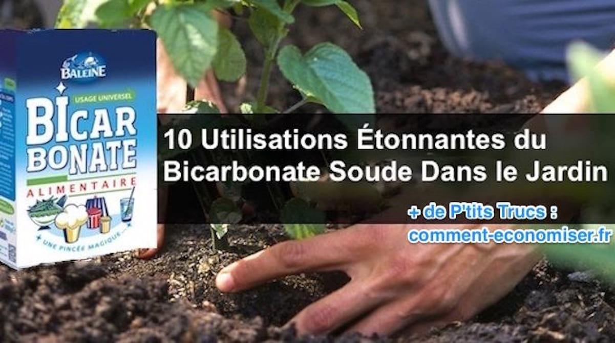 10 Utilisations Étonnantes Du Bicarbonate De Soude Dans Le ... encequiconcerne Bicarbonate De Soude Jardin