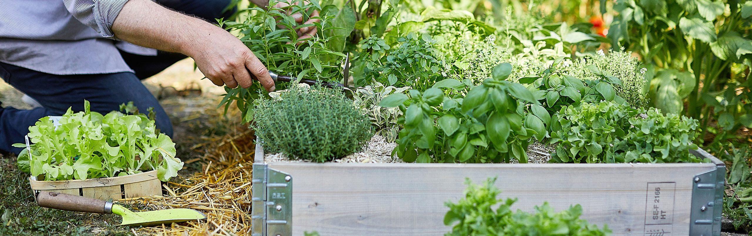 Bac À Potager Et Jardinière Sur Pieds : Botanic®, Carré ... avec Bac À Jardiner