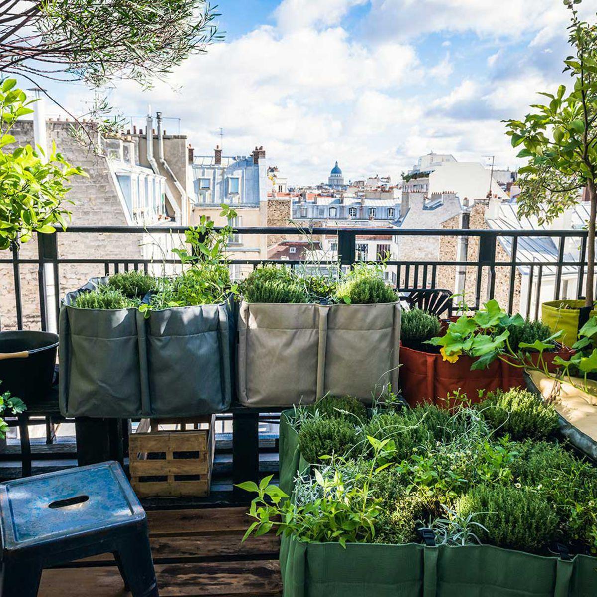 Balcon, Terrasse, Jardin, Comment Faire Un Potager : Femme ... dedans Jardin Potager De Balcon