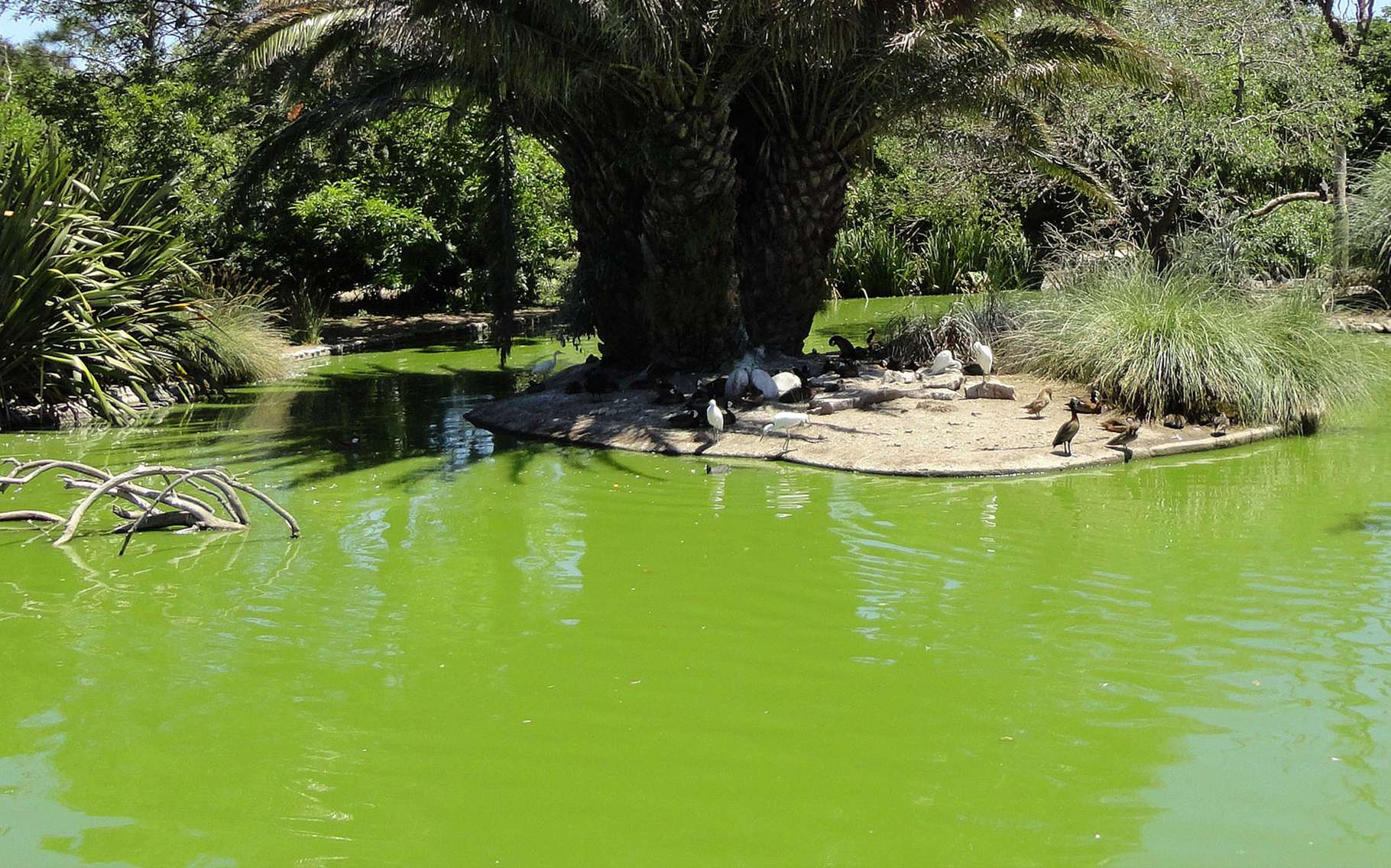 Bassin De Jardin : Quelles Dimensions ? | Dossier concernant Bassin De Jardin Préformé Grande Taille