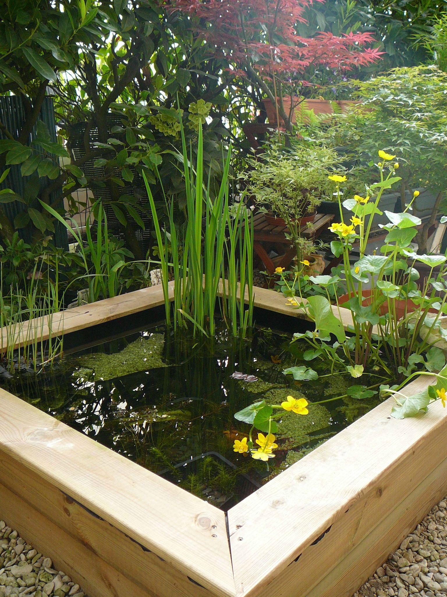 Bassin Poisson Terrasse encequiconcerne Petit Bassin Pour Jardin