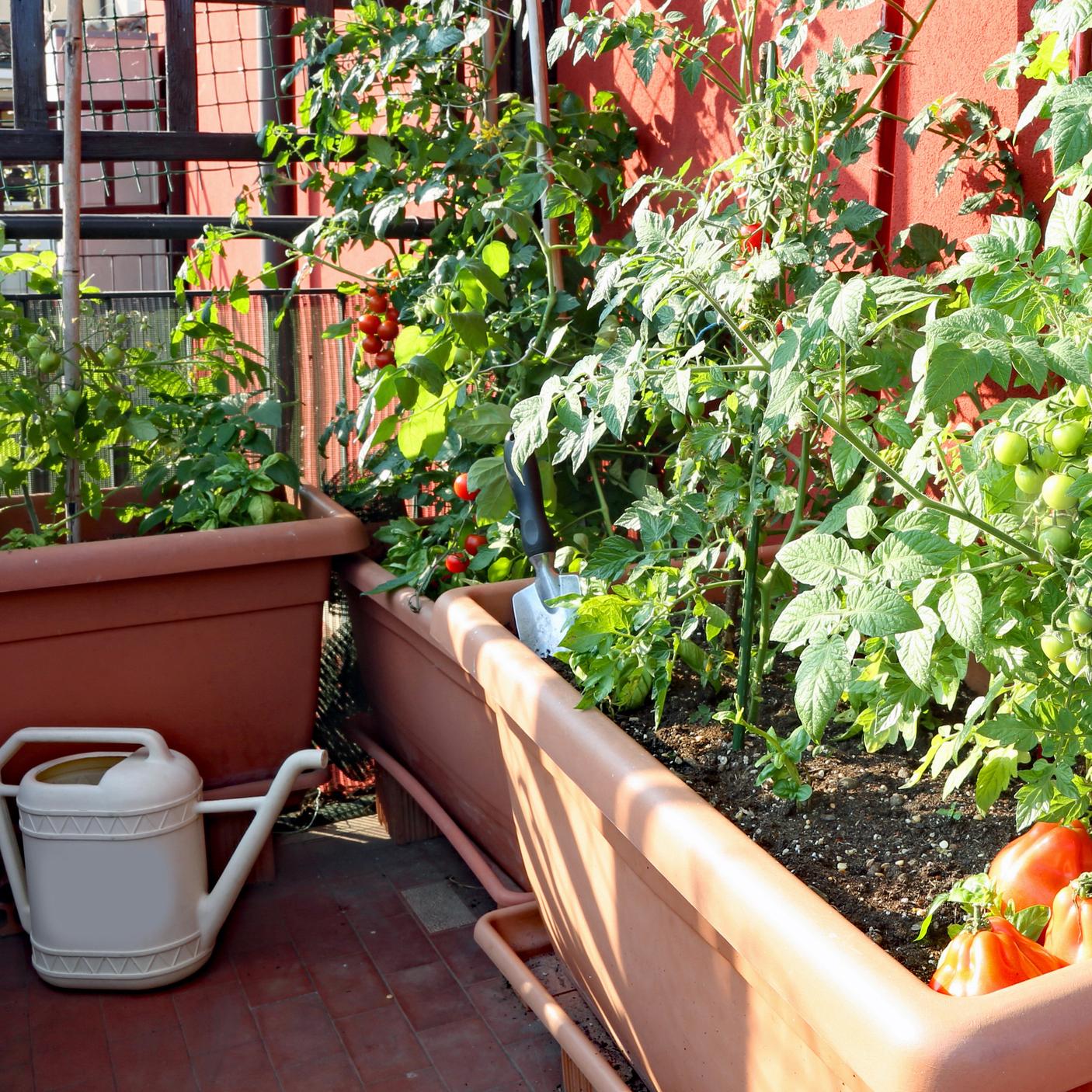 Comment Aménager Un Jardin Potager Sur Son Balcon ? – La ... destiné Jardin Potager De Balcon