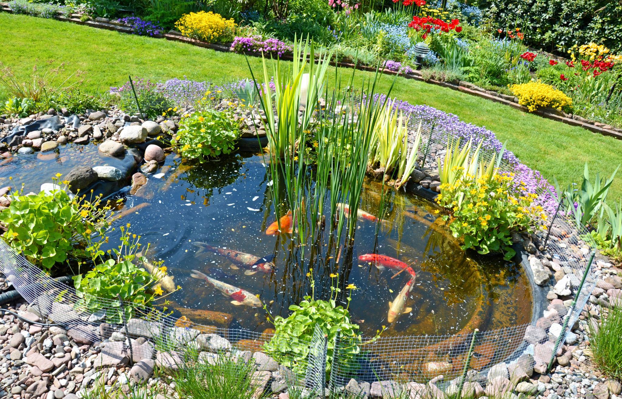 Construire Un Bassin De Jardin Pour Poissons - Magazine Zooplus pour Bac A Poisson Jardin