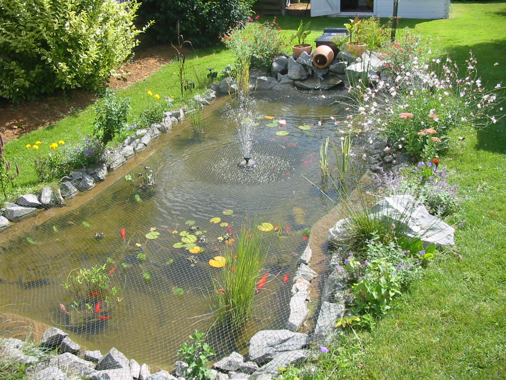 Construire Un Bassin Poisson Au Jardin, Photo Bassin De Jardin avec Bac A Poisson Jardin