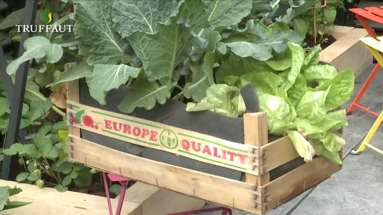 Créer Un Mini Potager Sur Un Balcon - Truffaut concernant Jardin Potager De Balcon