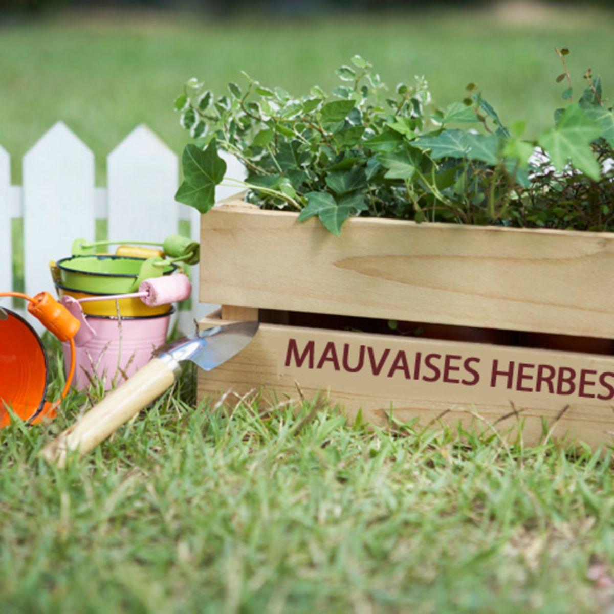 Le Bicarbonate, Ça Sert À Quoi Au Jardin ? : Femme Actuelle ... concernant Bicarbonate De Soude Jardin